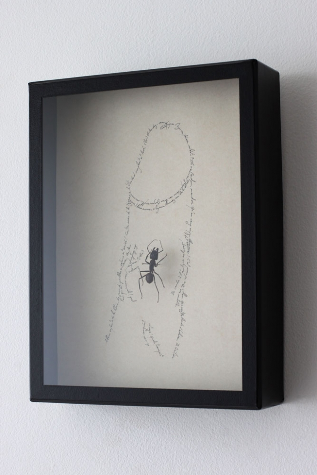 Entomogramms I