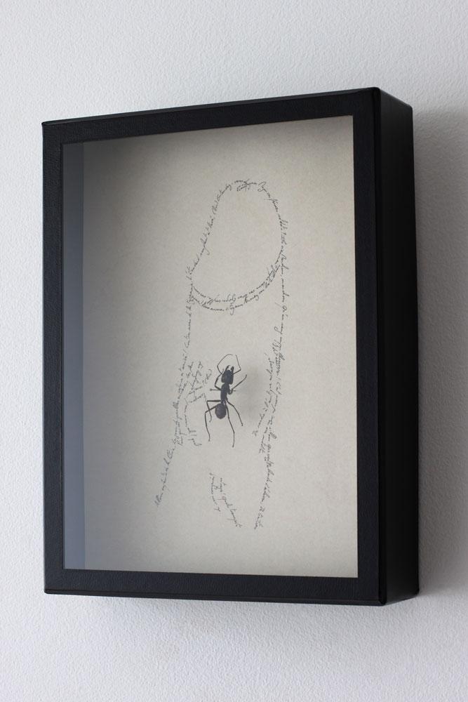 Entomogrammes I